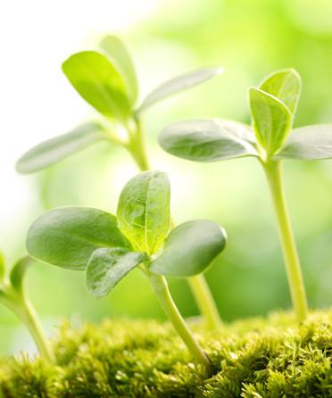 Extraits de plantes